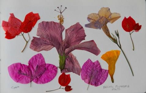 Vagabond Artist Images of Haiti--Belville Flowers